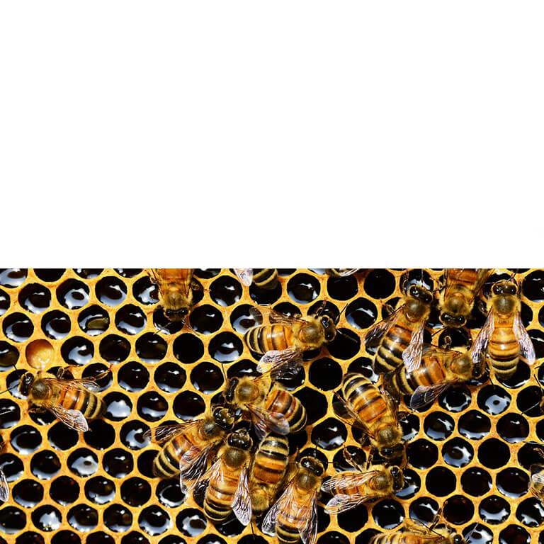 Wie die Bienen: Interne Kommunikation steigert das Engagement der Mitarbeiter